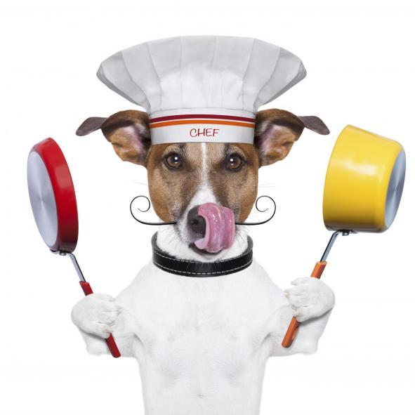 istockphoto_thinkstock_dog_chef