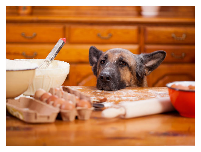 master-chef-for-dogs
