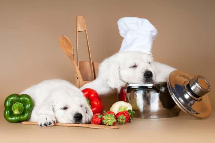 puppy-chefs